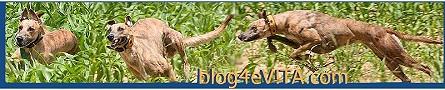 Banner-blog4eVITA