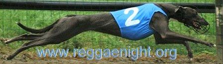 Banner-greyReggaenight