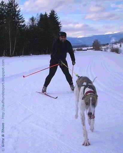 jaesper-skijoering-20081212-thomjoering