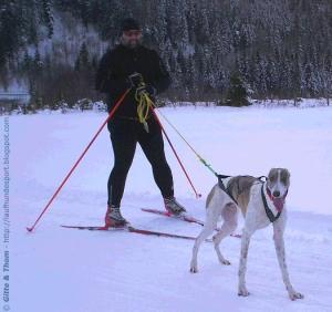 jaesper-skijoering-20081212-thomjoering2