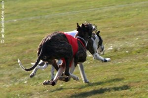 20090927-0025-CoursingBelfort