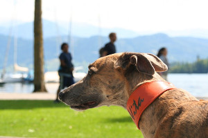 Halsband_orange_Luzern_20140701-202-small