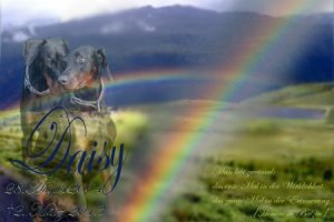 Daisy-Regenbogenbruecke-small