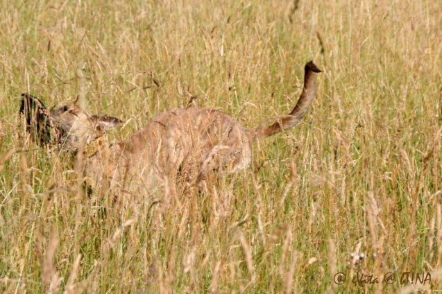 20130614-013-cheetah