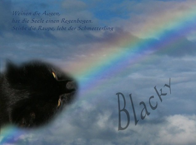Regenbogen-Blacky