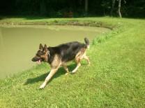 Filou will schnell ins Wasser :-)