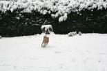 Durch den Schnee-Garten pesen :-)