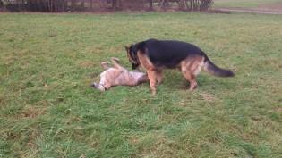 ... und sie wälzt sich auffordernnd im Gras!