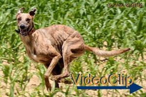 VideoClip-20130702-016-001