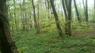 Selbst der Waldboden ist ein grüne Pracht!