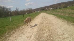 Wir sind am Dorfausgang, am Beginn unseres Jogging-Trips