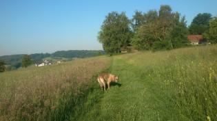 Hinter unserem Haus führt ein Weg direkt auf Wiesen und Felder...