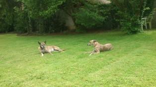 Während es sich Fjurka & Evita auf dem Rasen gemütlich machen...