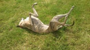 Evita schmeißt sich wohlig ins Gras - na, dann ist ja alles coooool!
