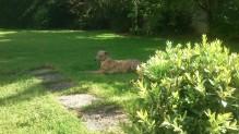... in unserem Garten!