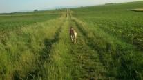 Auf den langen Wiesenwegen ist es herrlich, ...