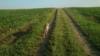 ... wenn kein Bauer unterwegs ist :-)
