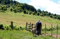 ... und hat ganz schnell begriffen, wie man durchs Kuhgatter auf die Weide geht.
