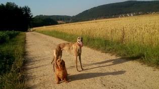 Evita & Dug - eigentlich wäre Evita lieber am Rand im Schatten geblieben ;-)