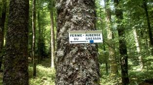 Dieser Wegweiser markiert den Weg durch den Wald :-)