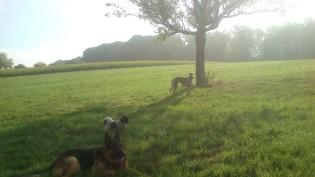 Heute Morgen gab es bereits den ersten Nebel.