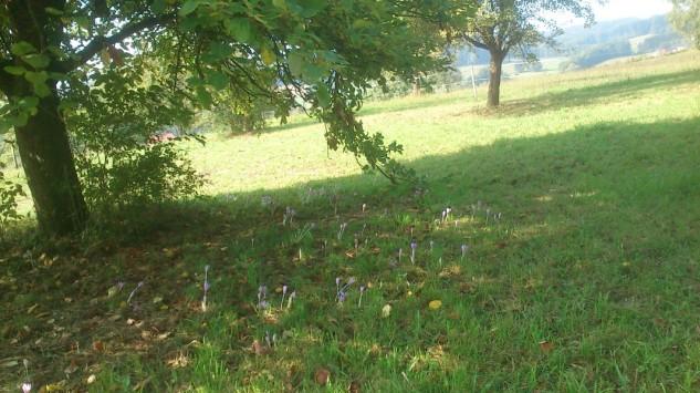 Die ersten Herbstboten unter einem Apfelbaum!