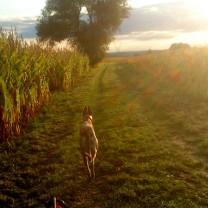 Hinein in den Herbstabend und die letzten Sonnenstrahlen!!!