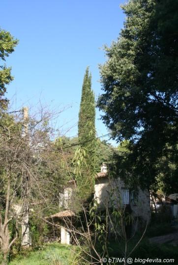 Rechts von der Zypresse das Wohnhaus, links hinter den Bäumen die alte Mühle