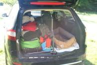 Vollbepacktes Auto: Zwei Hunde hinten & einer auf der Rücksitzbank
