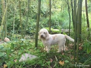 Dolly zwischen dem Bambus