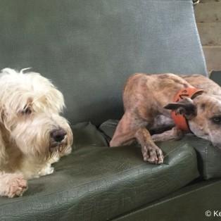 Die Couch war Dollys und Evitas Lieblingsplatz!