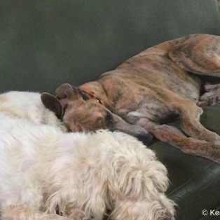 Zwei Hundefreundinnen beim Kontatkliegen ♥