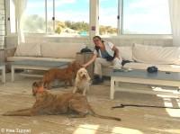 ... et Moi avec les chiens :-)