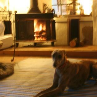 Auch unsere Doggis gefällt's am offenen Kamin :-)