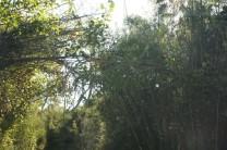 Geht es ab... in den Dschungel