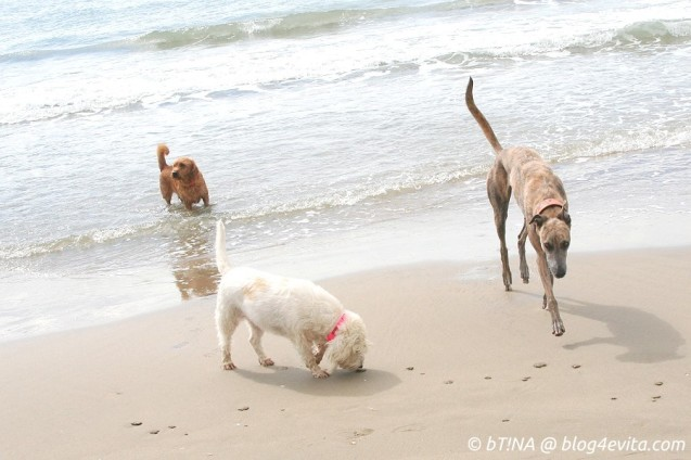 p20150914-0065-enjoy_plage
