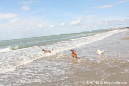 Dolly & Dog kannten das Meer...