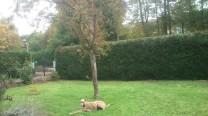 Evita liegt genüsslich im Garten.