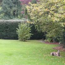 ... obwohl sie genauestens die Arbeiten unseres Gärtners überwacht hat ;-)