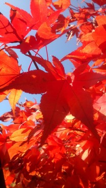 Und jetzt in der Sonne leuchten die Farben noch mehr!