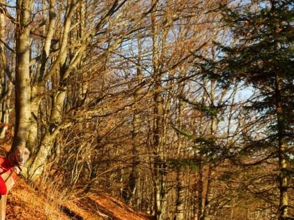 Die Nachmittagssonne durch die Baumstämme genießen! ... und Evita ganz links in der Ecke!