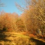 Der karge Herbstwald in gold-rosé