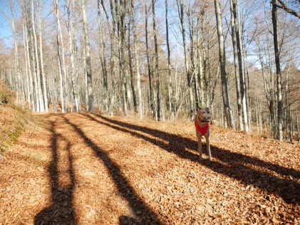 Evita im kahlen Buchenwald, der eigentlich nur noch auf den Schnee wartet.