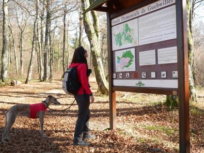Am Ende des lichtdurchflutenden Waldes ist eine große Kartenübersicht.
