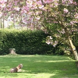 Evita im Schatten des Kirschbaumes