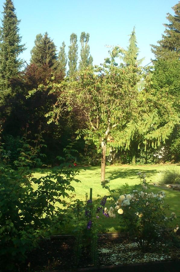 Maison_de_Lys_20150701-Sommergarten-Rittersporn