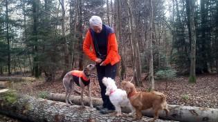 Kea balanciert mit den Doggies auf den Baumstämmen