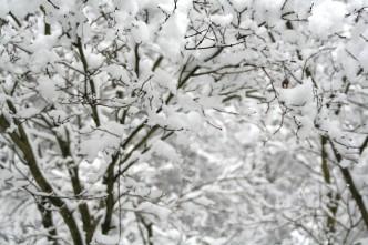 20160225-Evita_Snow-04-Garten