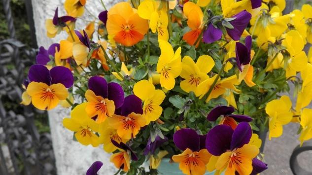 ... des Frühlilngs!