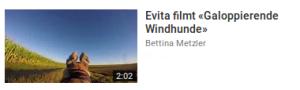 evita_galoppierende_windhunde
